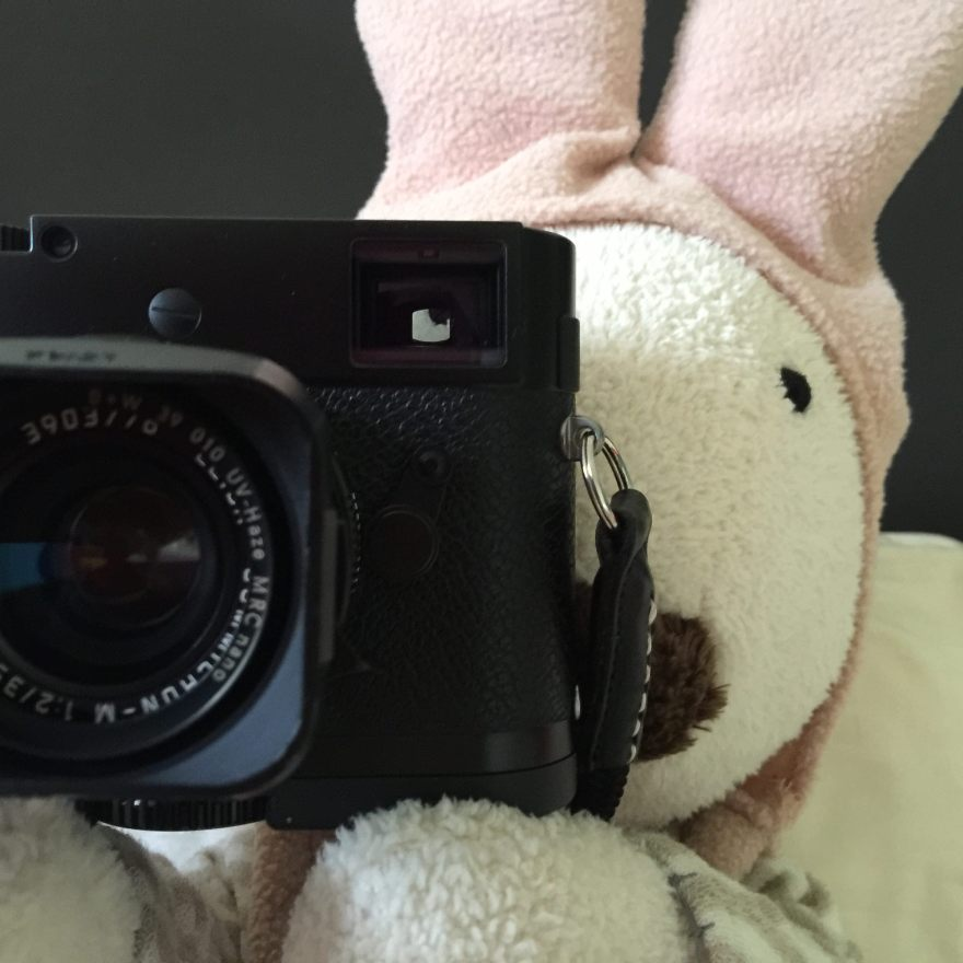 funny bunny photography